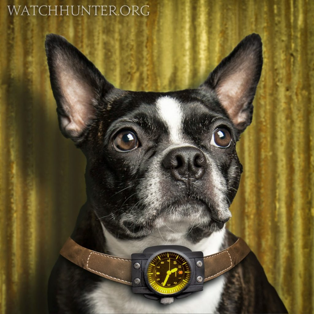 Zack The Boston Terrier and Swiss Army Vintage Night Vision Watch
